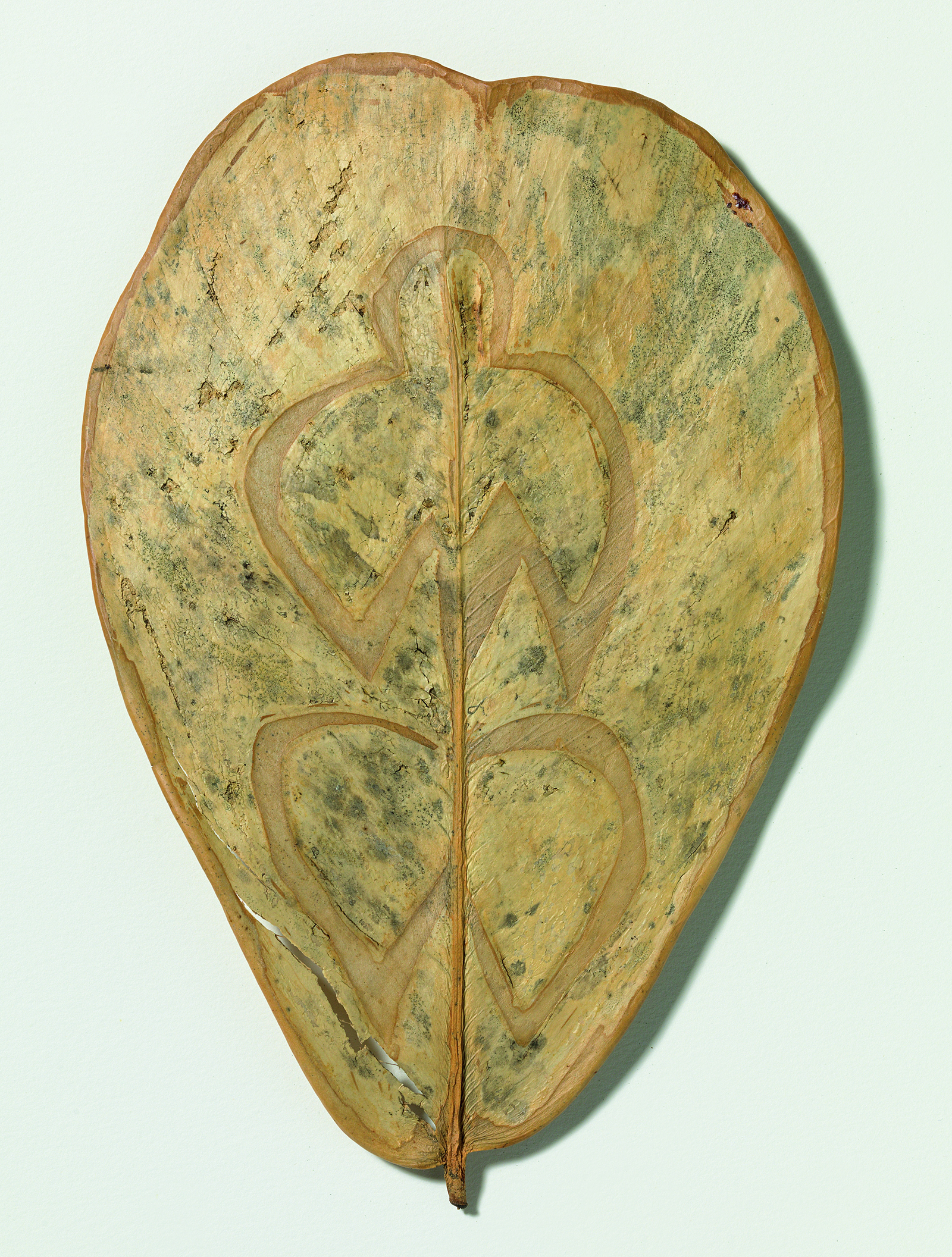 Ana Mendieta, Sense títol (Leaf Drawing)